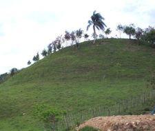 Siembran más de 5.000 árboles en República Dominicana
