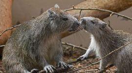 Incendios en Cuba amenaza a especies en peligro de extinción