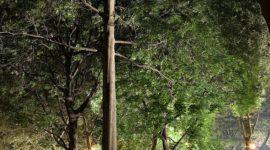 Nueva York se hará más verde con árboles históricos clonados