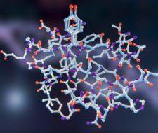 Las glándulas endocrinas en vertebrados: hormonas que producen y sus funciones