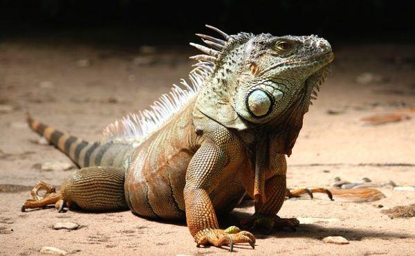 Animales vertebrados: Características anatómicas y fisiológicas ...