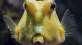 Animales Vertebrados: Peces, Anfibios, Reptiles, Aves y Mamíferos