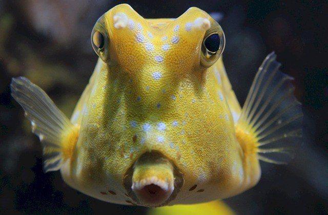 Animales vertebrados peces anfibios reptiles aves y for Modelos de estanques para peces