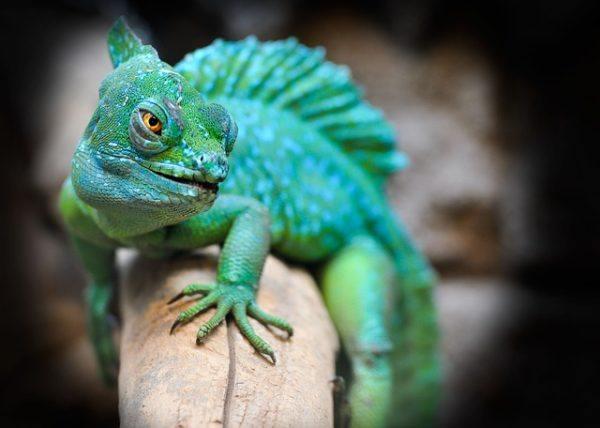Animales Vertebrados Peces Anfibios Reptiles Aves Y