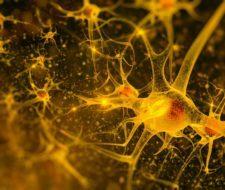 Componentes y funciones del sistema nervioso desde el punto de vista funcional: somático y autónomo