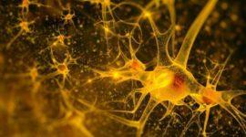 Funcionamiento integrado de los sistemas nervioso y hormonal en los animales