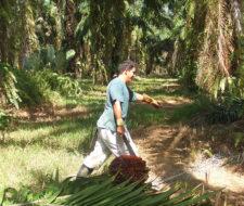 Quieren instalar planta de biocombustibles en Tenerife