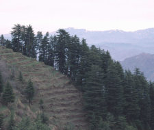 Se plantarán 10 millones de árboles en un día en la India