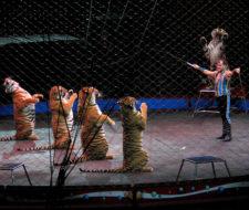 Activistas desnudos protestan contra los circos