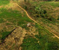 Indonesia demanda dinero para cuidar sus bosques