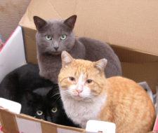Gatos salvados de la muerte a través de Internet