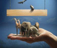 Relaciones tróficas del ecosistema: cadenas y redes