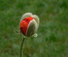 Plantas: Musgos, helechos, gimnospermas y angiospermas