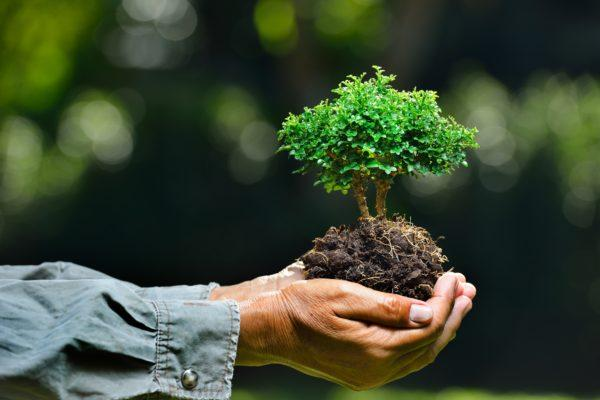 Como hacer un bonsai paso a paso