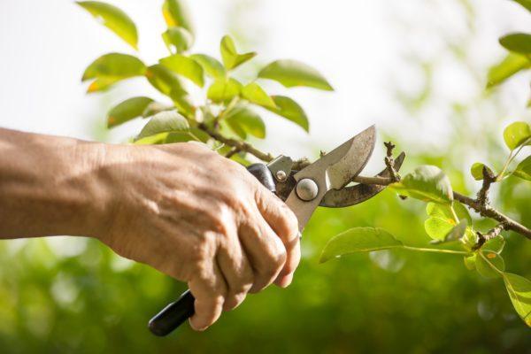 Como hacer un bonsai paso a paso la poda
