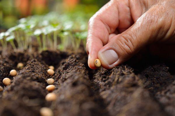 Como hacer un bonsai paso a paso semilla