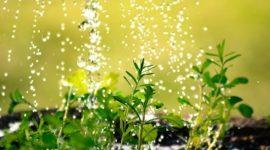 Cómo realizan las plantas la absorción de agua y sales minerales