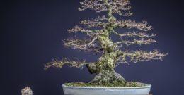 Cómo hacer un bonsai