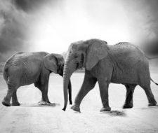 Factores de la distribución de los seres vivos: geológicos y biológicos