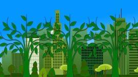 Fases de la fotosíntesis, factores que le afectan y su importancia biológica
