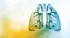 Tipos órganos y aparatos excretores en los distintos grupos de animales