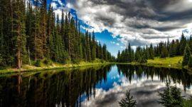 Componentes del ecosistema: comunidad y biotopo