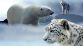 Hábitat y nicho ecológico: factores limitantes, adaptaciones y tolerancia