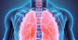 Respiración celular de respiración en los animales: ventilación e intercambio gaseoso