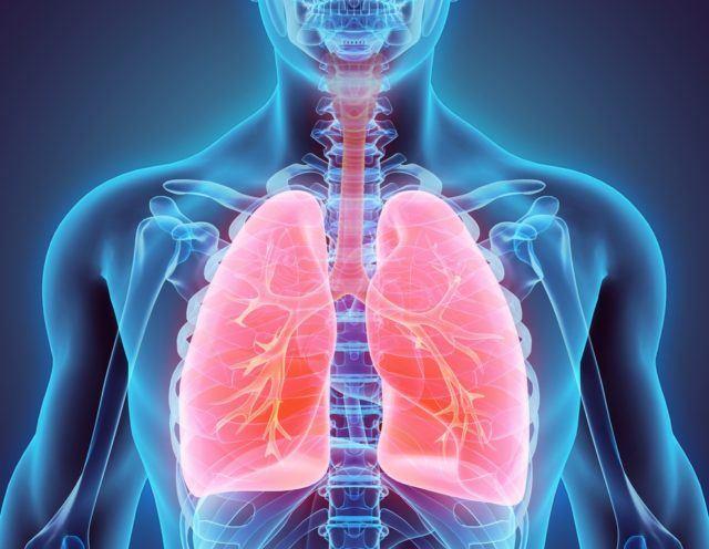 Respiracion Celular De Respiracion En Los Animales Ventilacion E