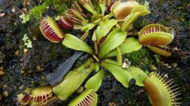 Función de excreción en vegetales y las sustancias producidas por los tejidos secretores