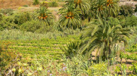 Disminuye la superficie y la producción de agricultura ecológica en Extremadura