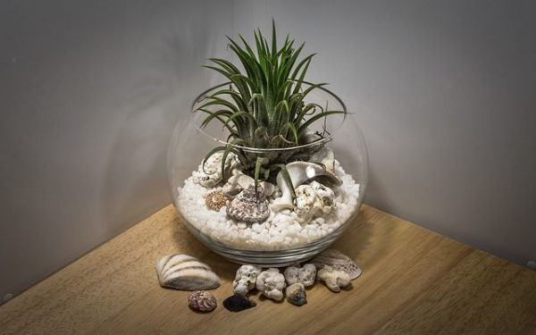 como-decorar-botellas-de-cristal-o-de-vidrio-pecera