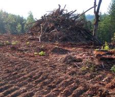 Ventajas y desventajas de las chimeneas bioetanol - Chimeneas de biocombustible ...