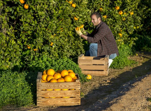 Agricultura ecologica beneficios frutas