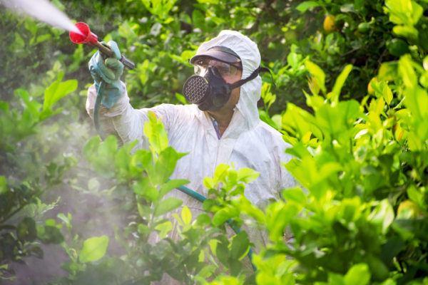 Agricultura ecologica beneficios fumigando