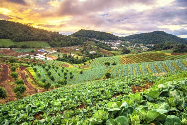 Agricultura ecologica beneficios