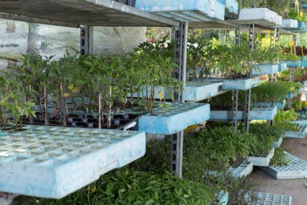 Agricultura ecologica beneficios plantacion