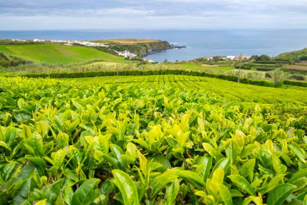 Agricultura ecologica beneficios verde