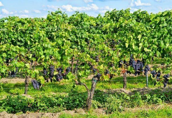 Agricultura ecol gica principios y beneficios de la for Rotacion cultivos agricultura ecologica