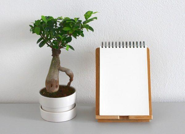 El proceso del papel o de cómo un árbol se vuelve papel ...