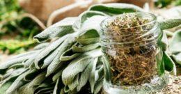 Cómo cultivar Salvia y sus cuidados