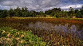 La importancia de los pantanos para el clima mundial