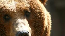 Los animales como indicadores de cambio climático