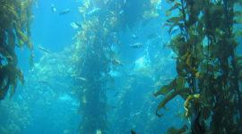 Bosques gigantes bajo el Océano Pacífico