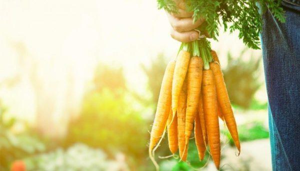 Que son alimentos organicos