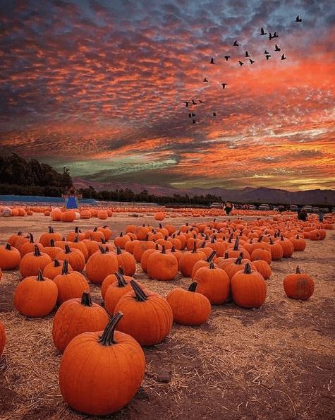 Halloween ecológico 2020 calabazas