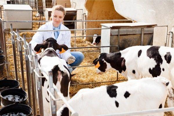 Efectos de la ganadería en el cambio climático