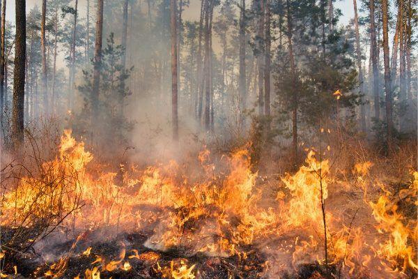 Principales causas de los incendios forestales