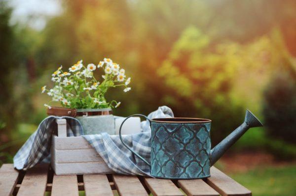 Cómo plantar manzanilla en casa