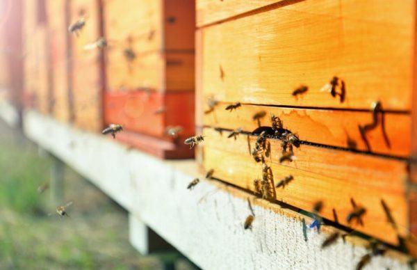 Abejas haciendo miel
